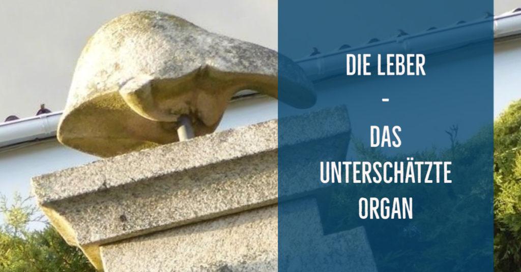 Die Leber – Das unterschätzte Organ